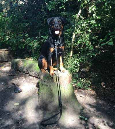 dog-training-wirral-19
