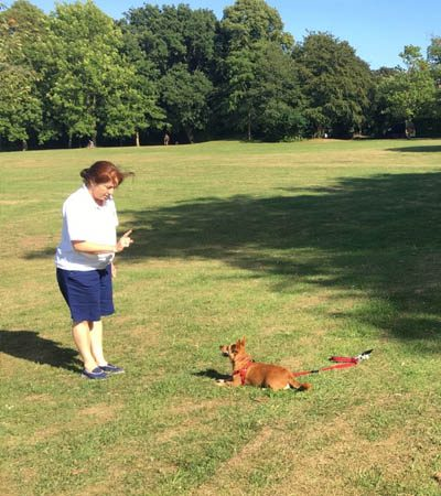 dog-training-wirral-21
