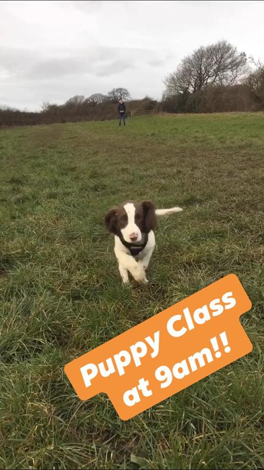 puppy classes wirral